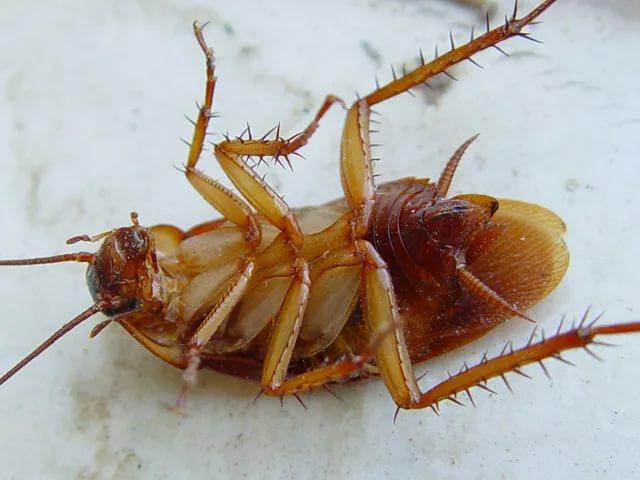 уничтожение тараканов в Екатеринбурге цена